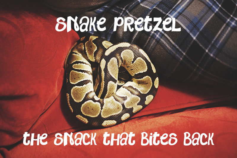 Snake Pretzel My Pet Python