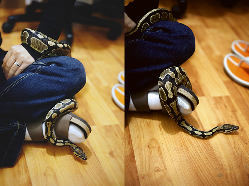 ball python wrapped around arm and foot