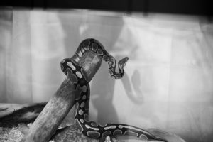 artsy-python-photograph