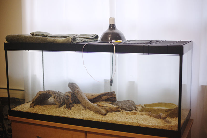 keeping humidity in ball python cage or tank
