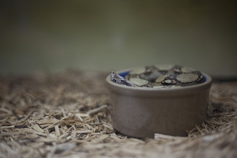 snake in a cup