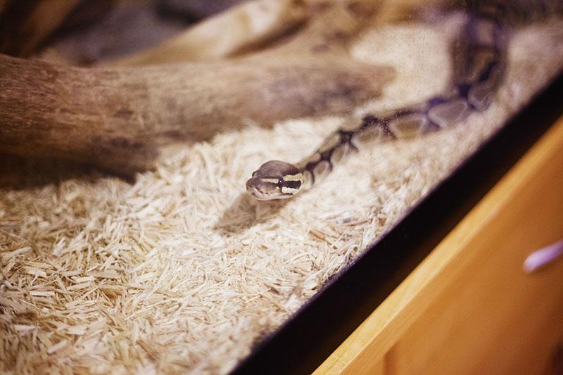 happy slithering snake