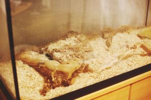 royal-python-enclosure-aspen
